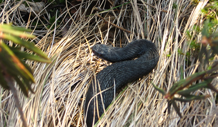 Snake at the moor (3)